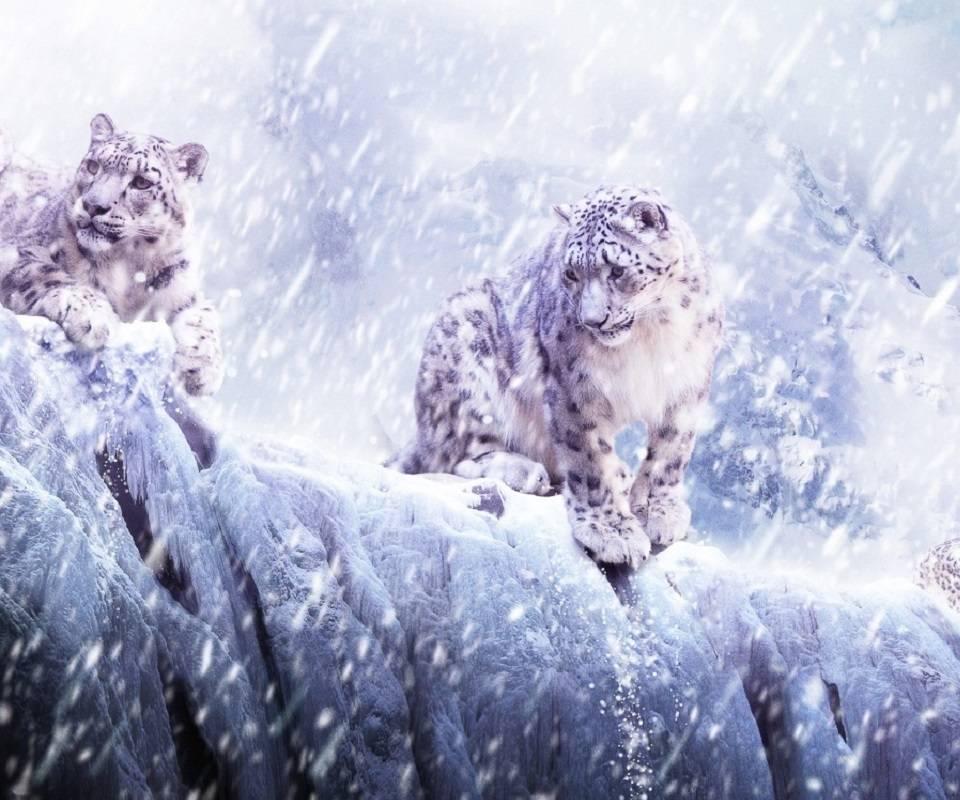 White Cold Kittys