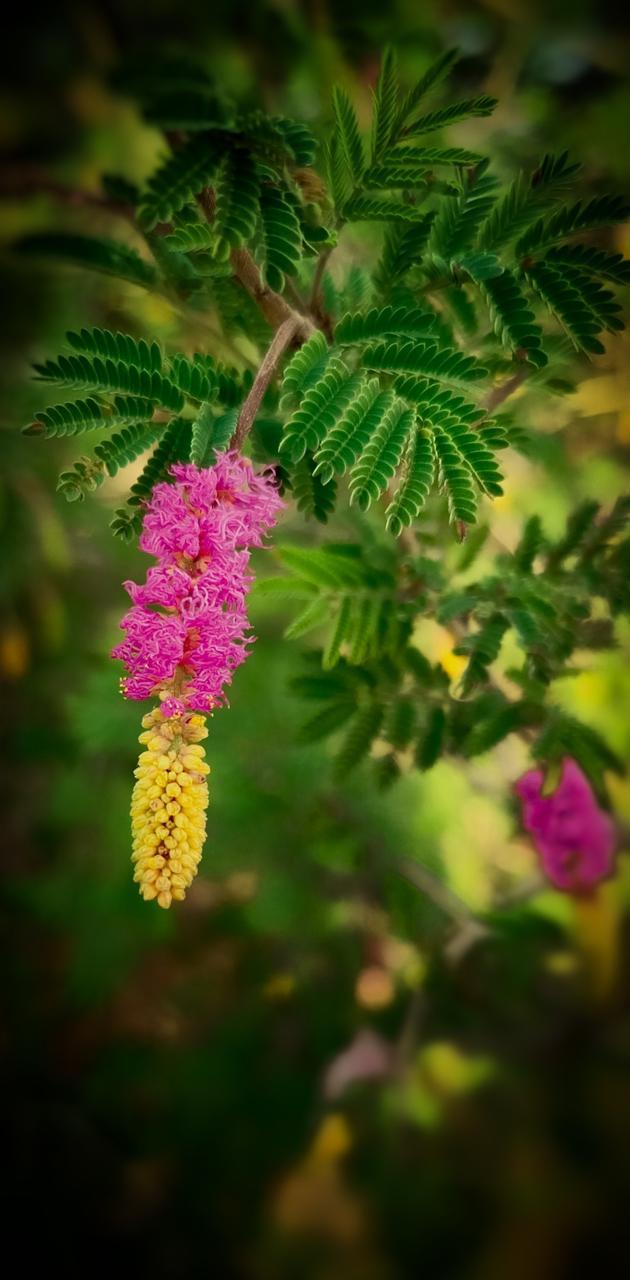 Attractive Flower