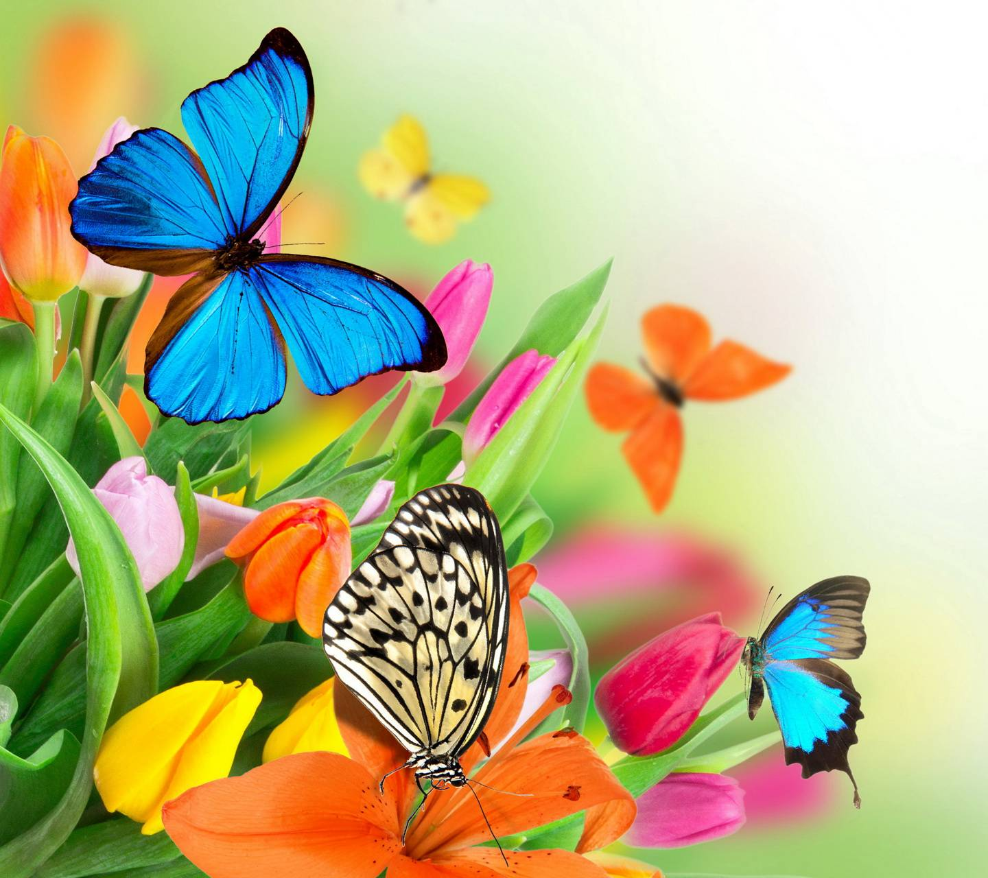 Spring Butterflies Wallpaper By Marika 24 Free On Zedge