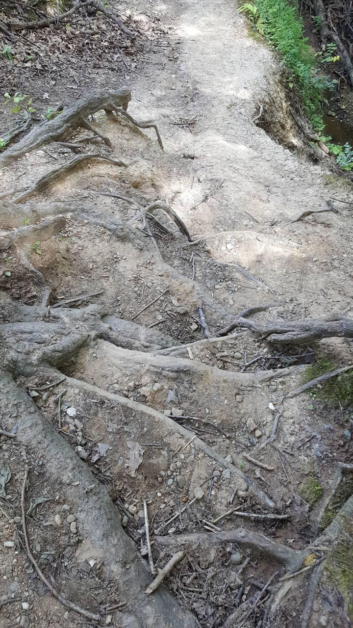 Natures steps