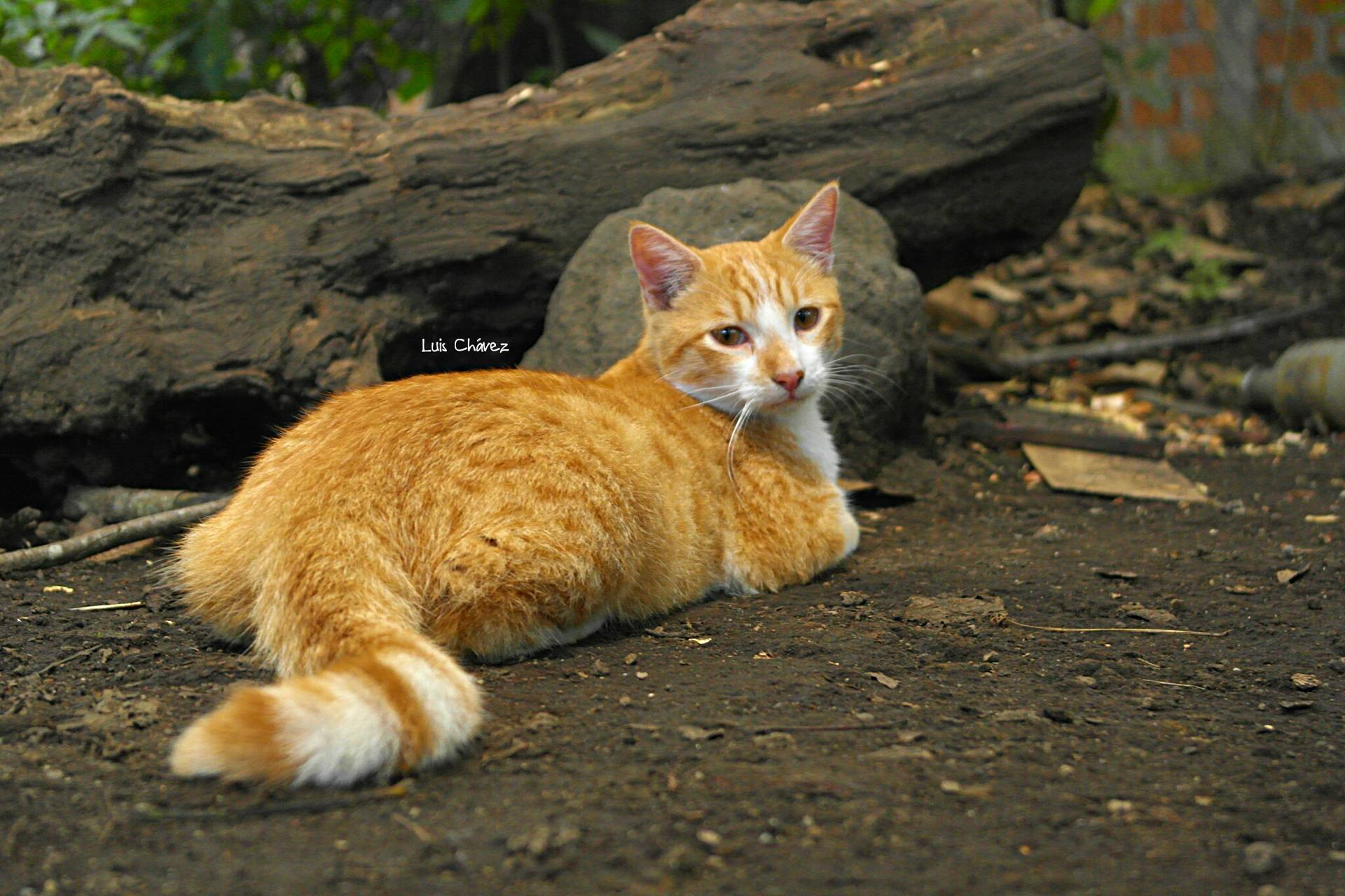 Cat Jin