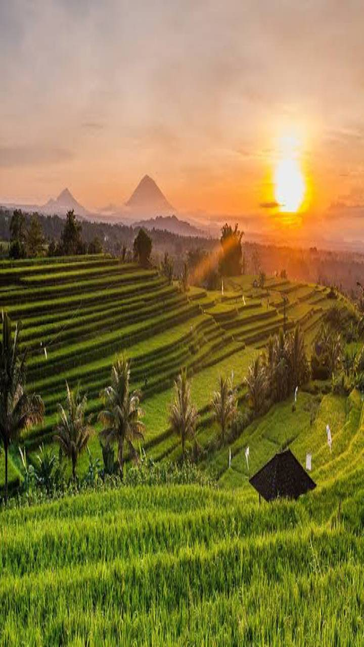 Sunset In Ubud Bali