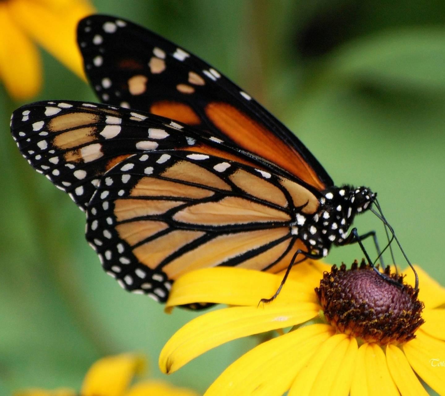 Butterfly -flower