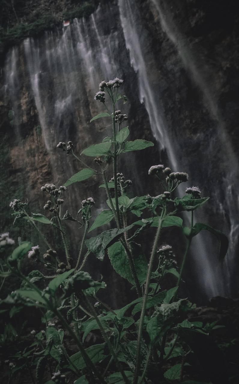 Fresh nature flowers
