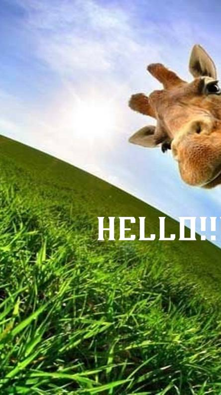 Hello Animal