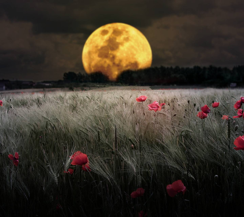Beautiful Night Moob