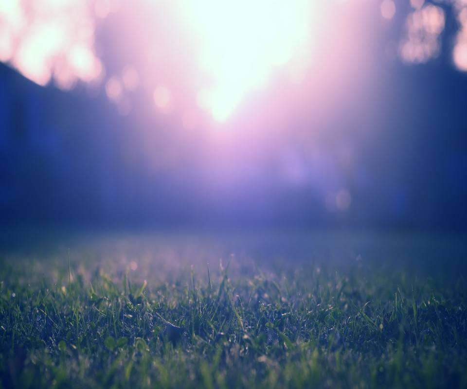 Sunrise Misty Grass