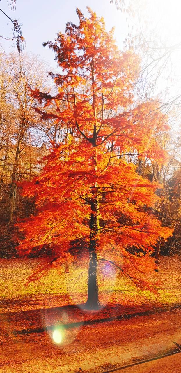 4K Autumn