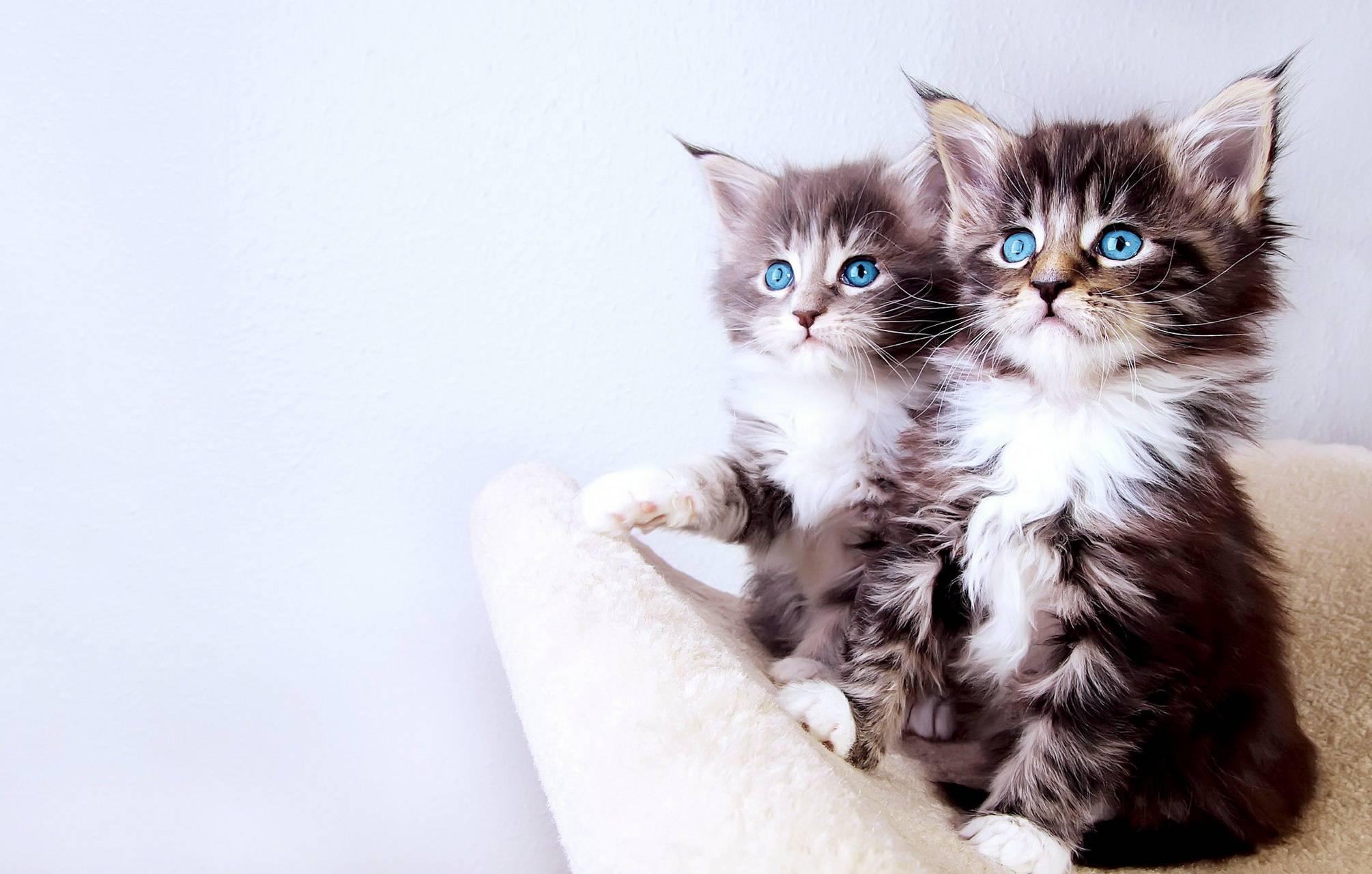 Cute kittens 1