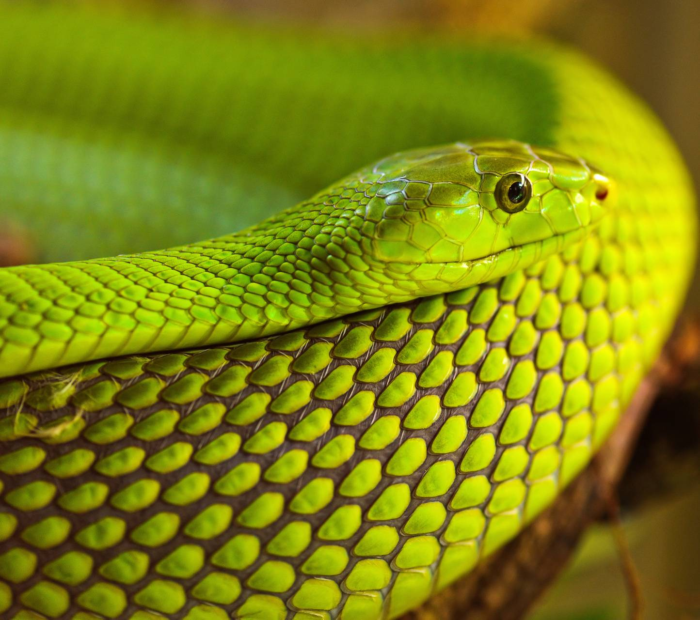 Snakes 1