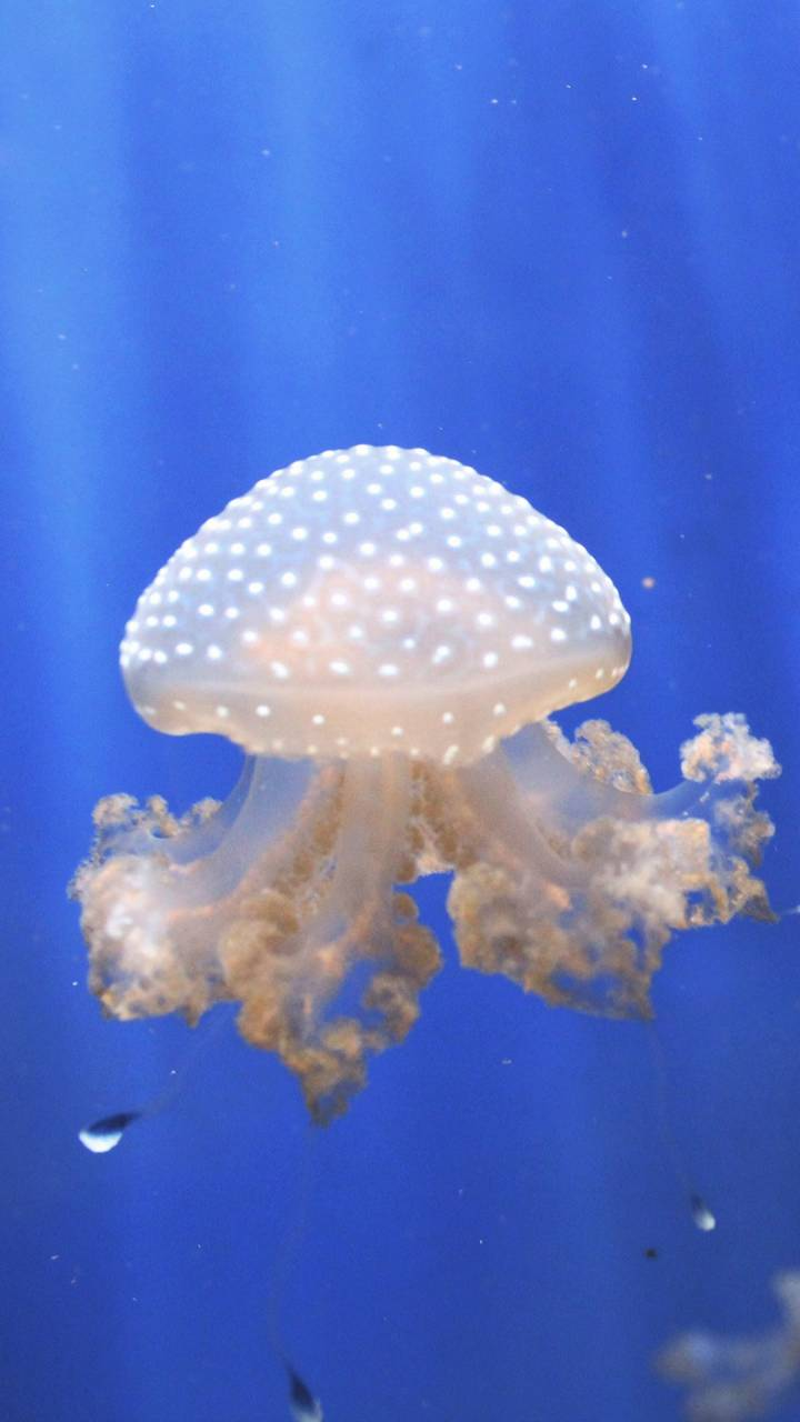 Jellyfishes Aquarium