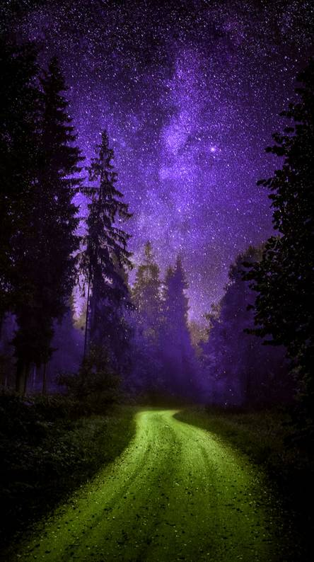 Night Forest Wallpapers Free By Zedge