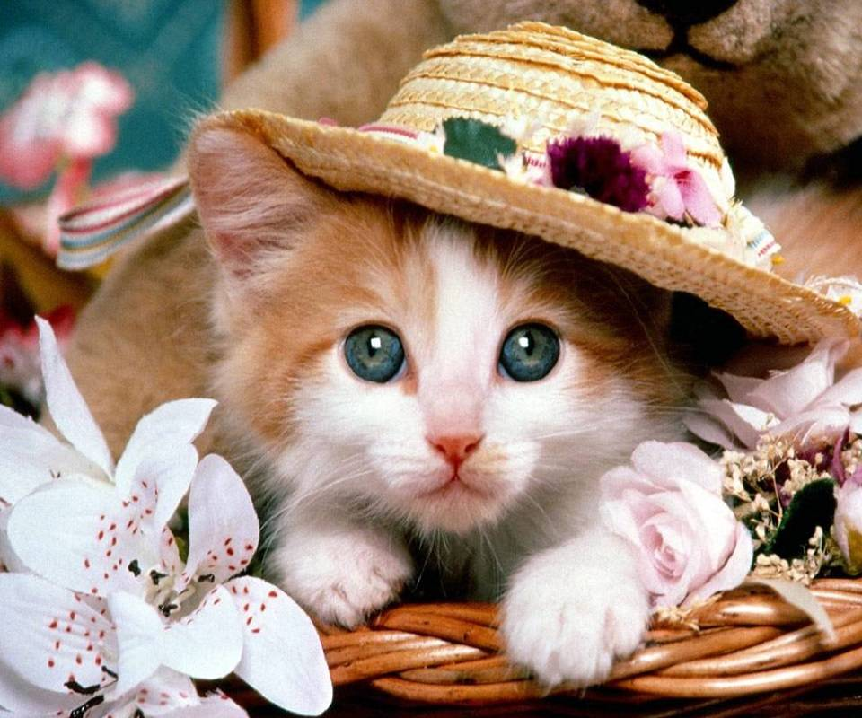 Kitty in a hat