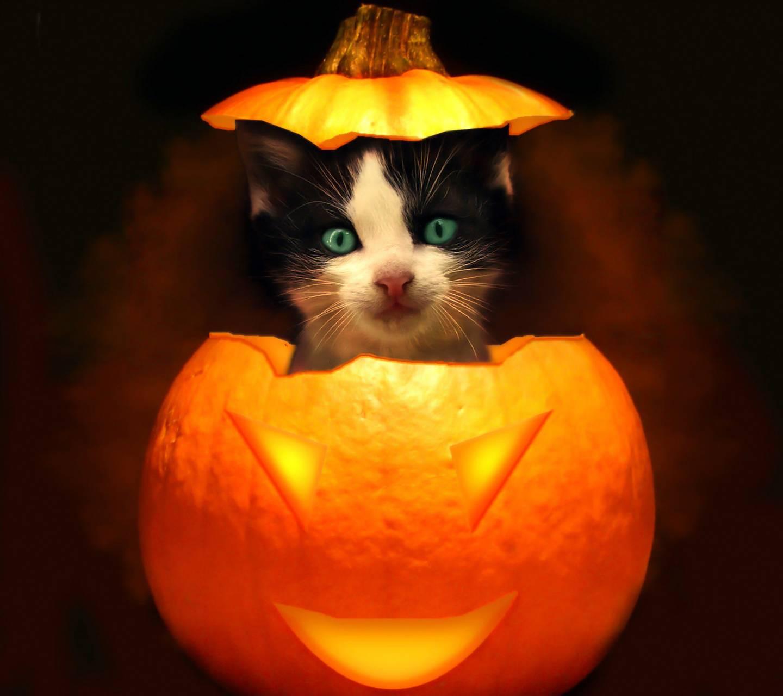коты на хэллоуин пригодятся
