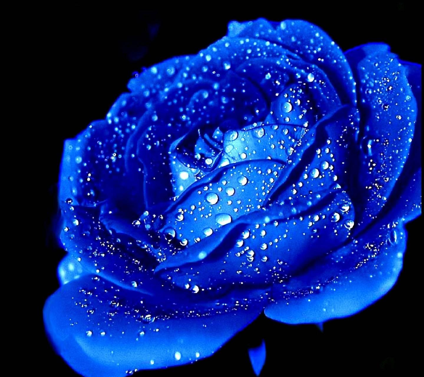 flower------------