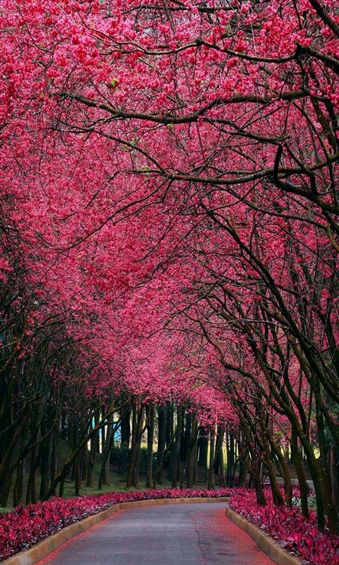 pink nature hd