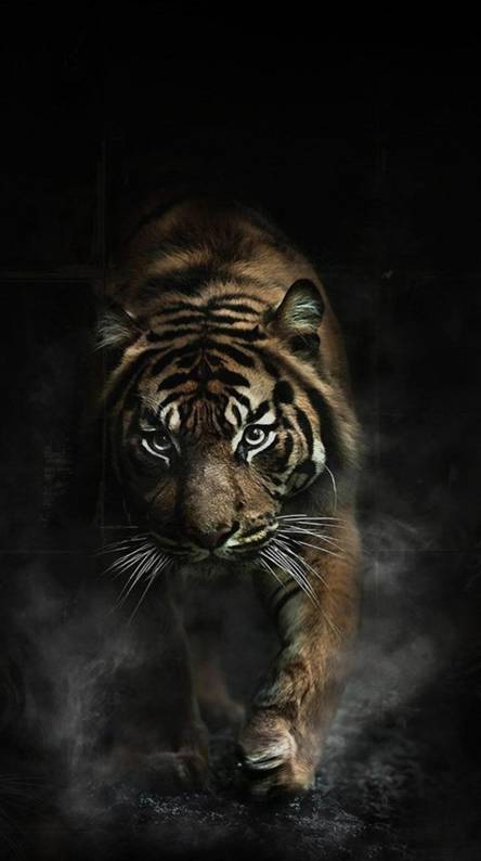 Angry Tiger Wallpapers Free By Zedge