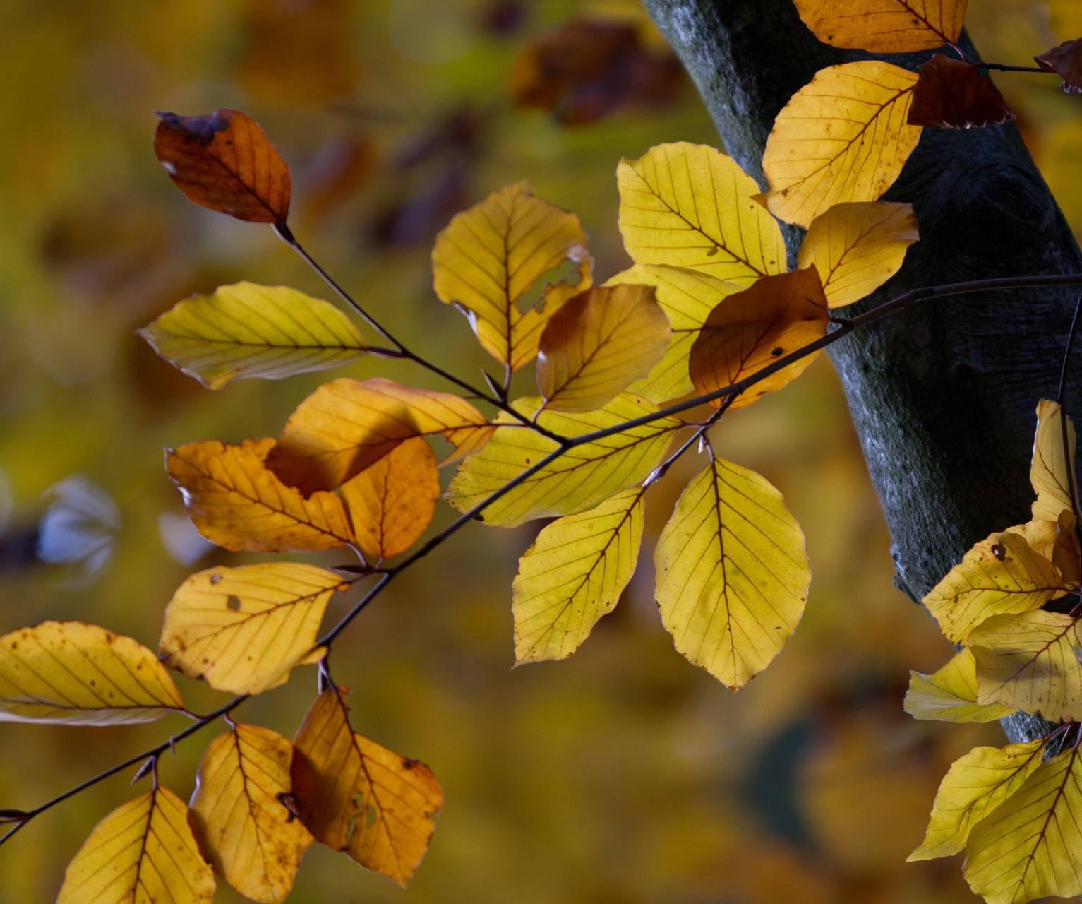 Leaves Hd