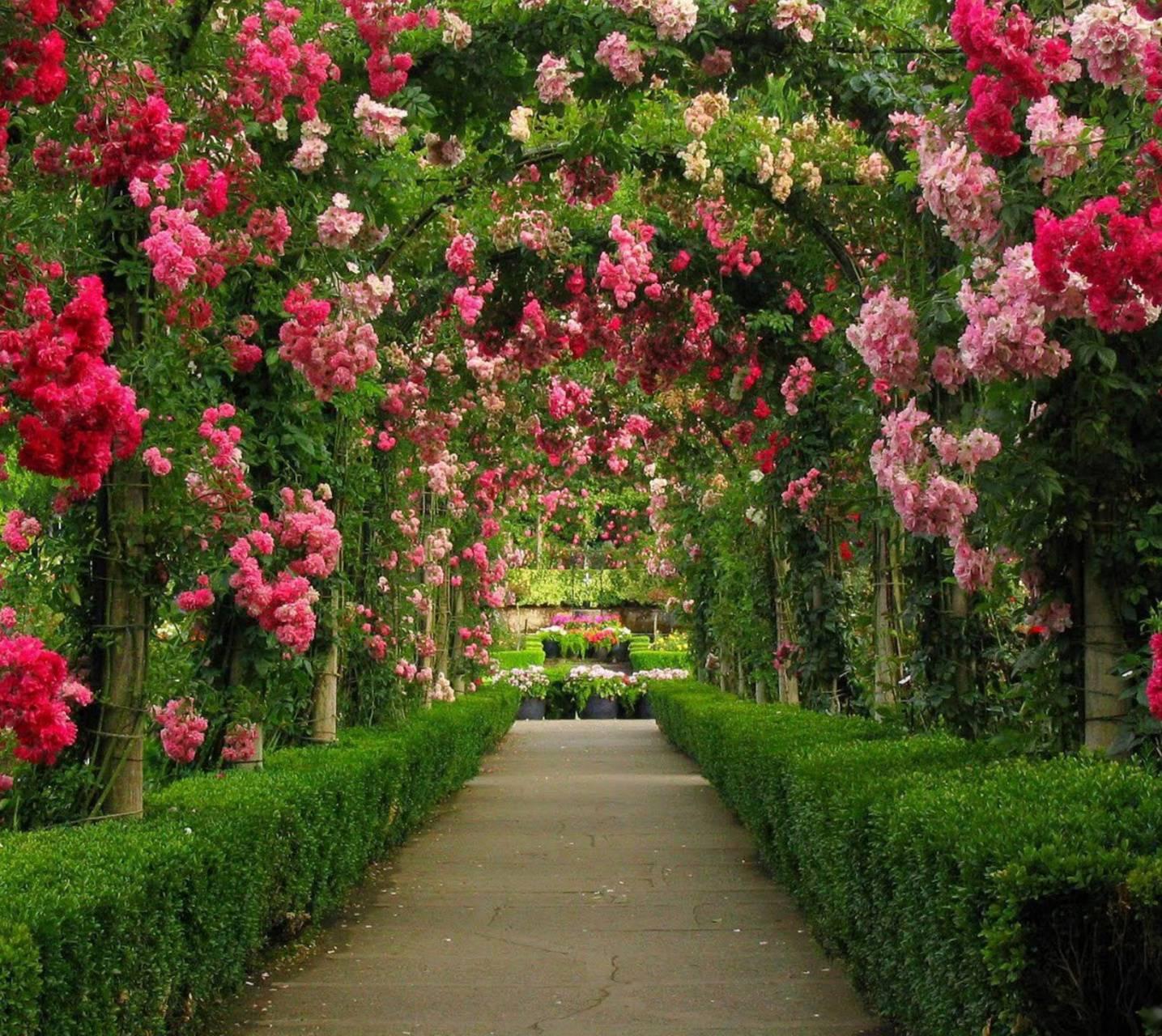 Flowers Path