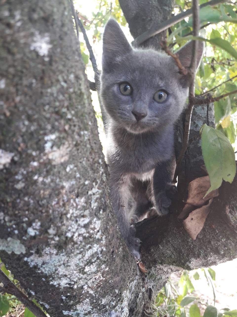 Gatos gris 3