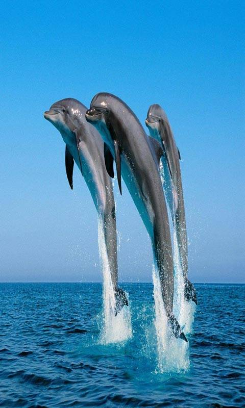 Flying Dolphines