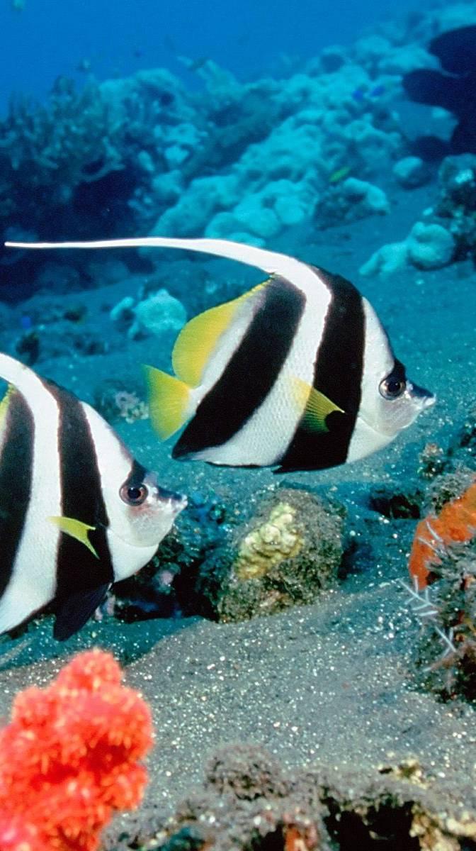 Couple Fish