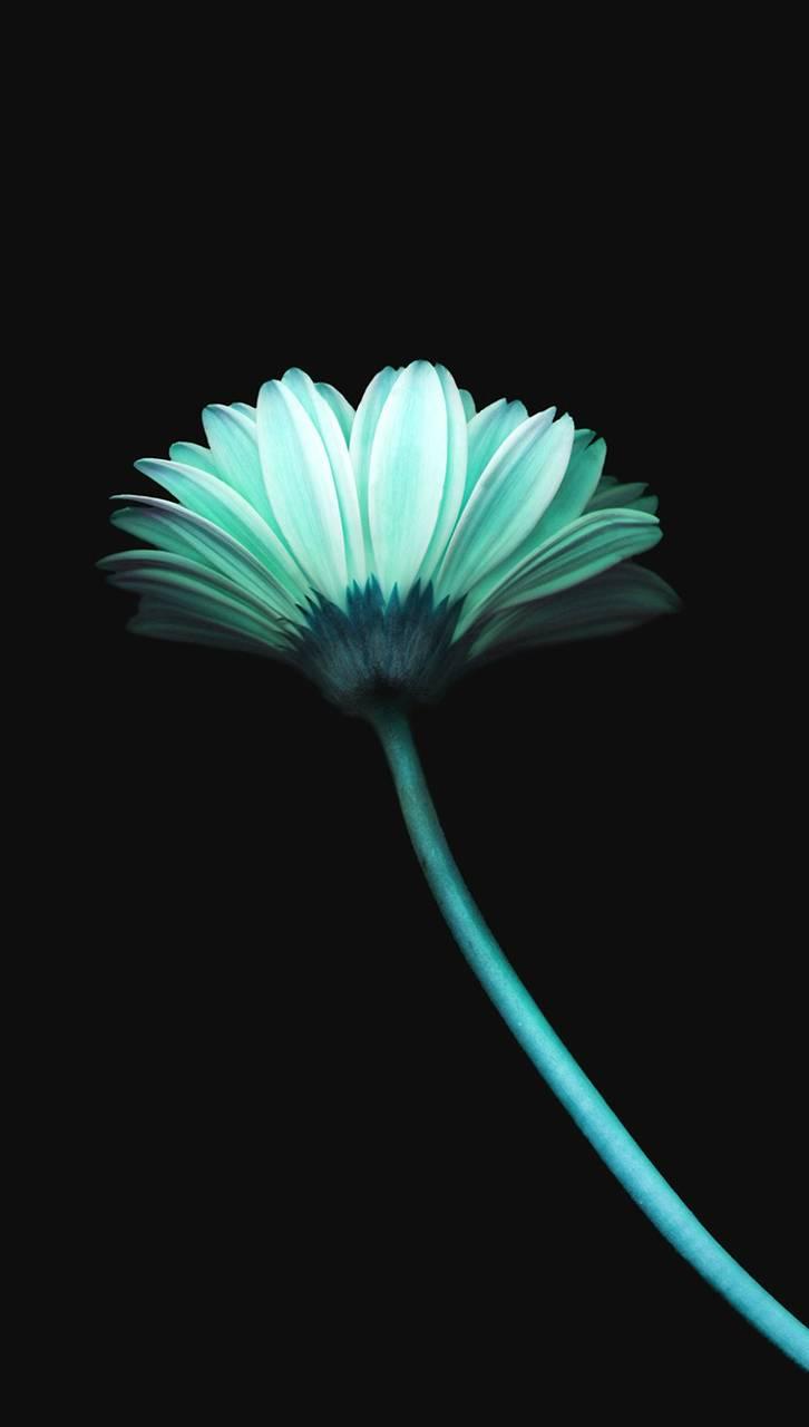 Flower Dark Blue