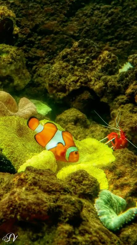 Fish tank nemo