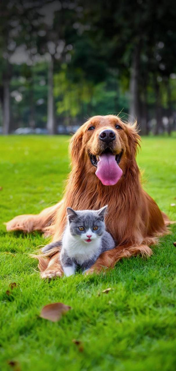 Cute Cat Dog Wallpaper By Mohakthakur 5a Free On Zedge