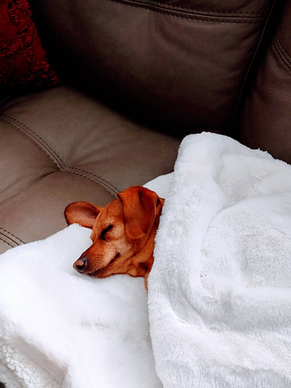 Peaceful puppy