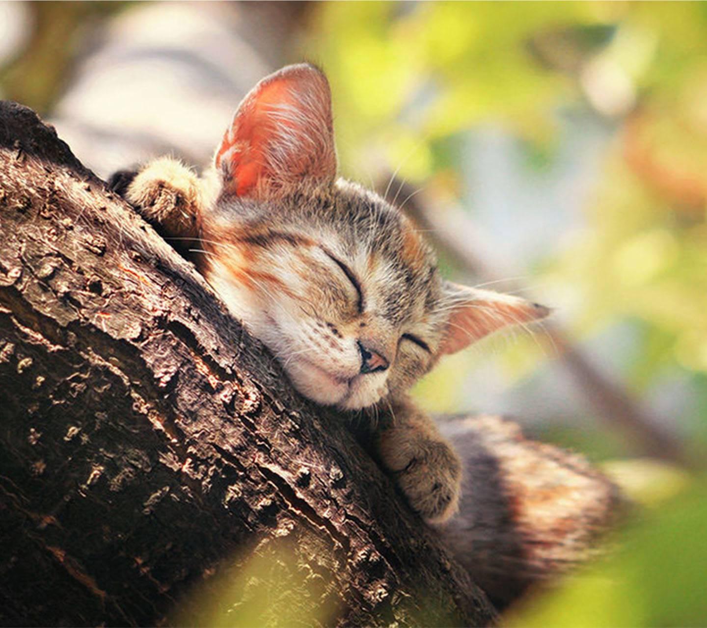 Кот спит открытка