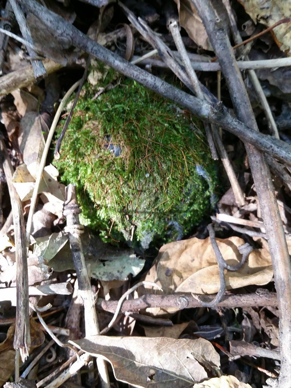Moss boll