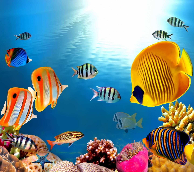 Картинки анимашки аквариумы, день инженера-механика россии