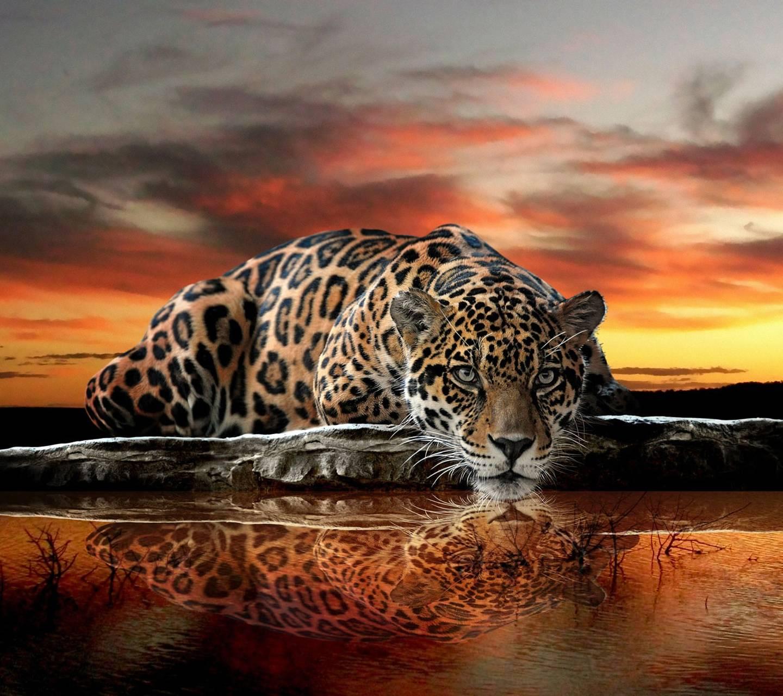 Sunset Jaguar