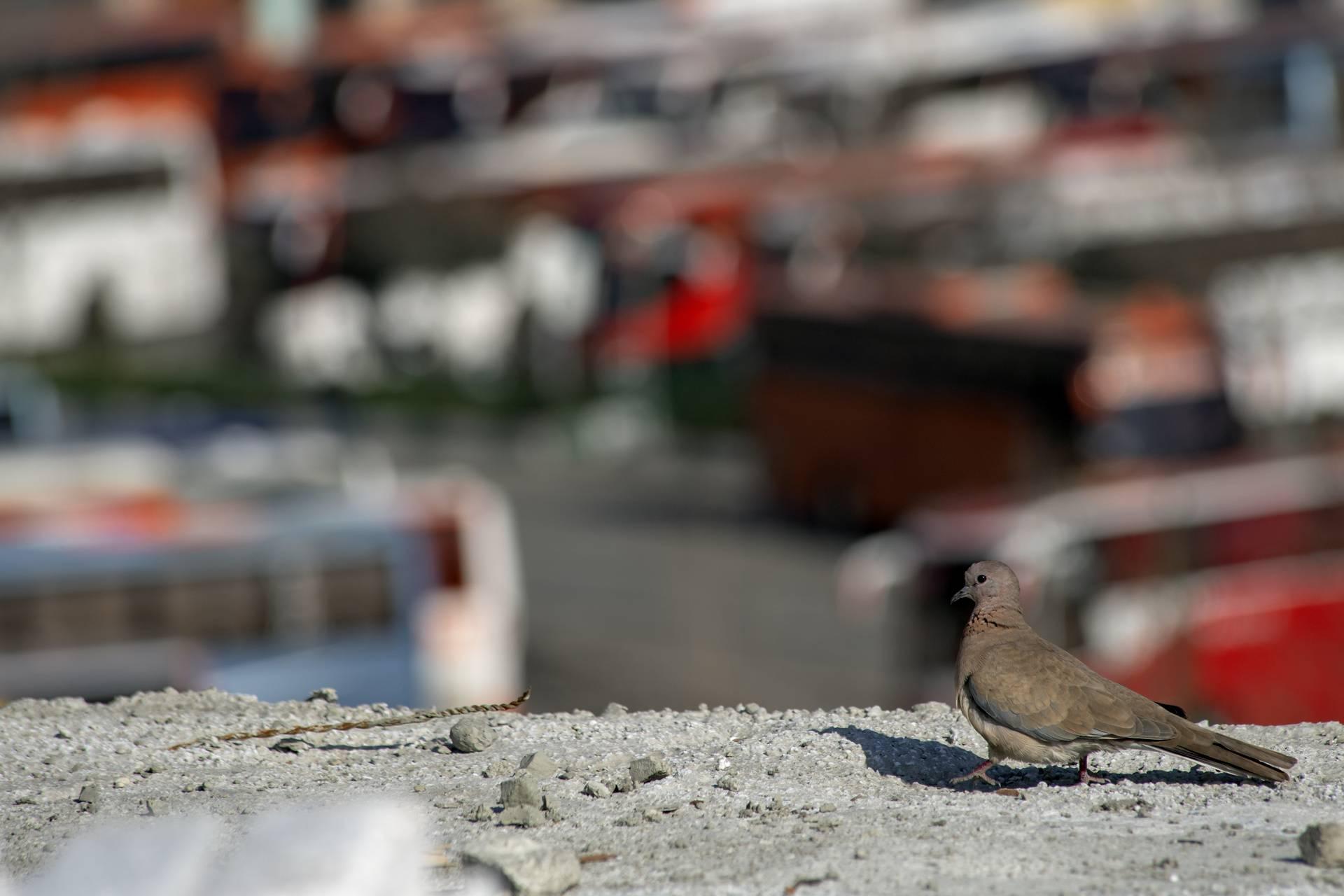 Bird in Tehran