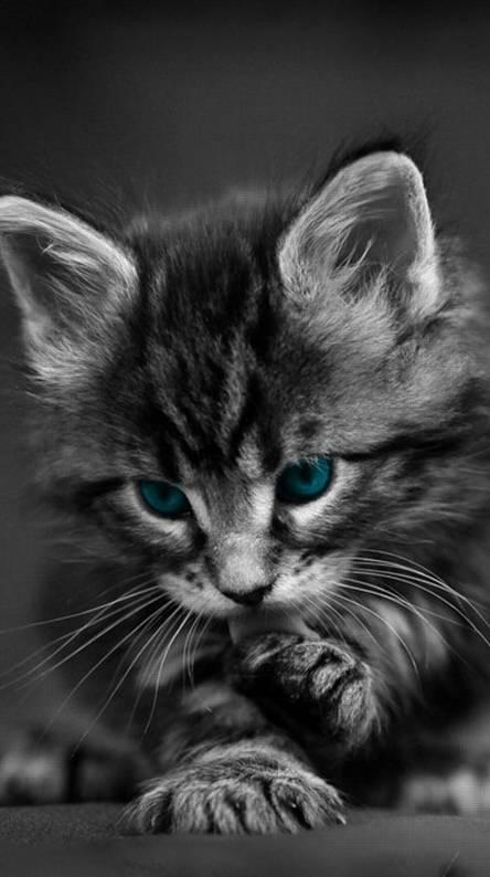 Kitten HD