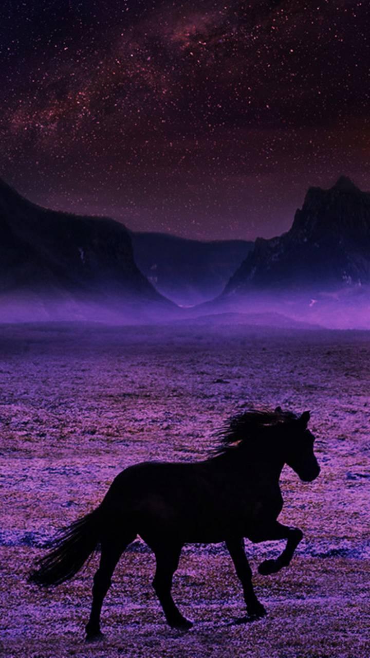 Breathtaking Horse