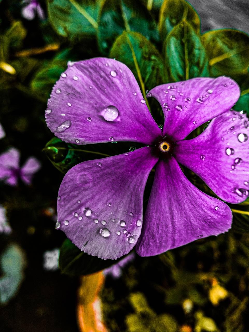 Pink water flower