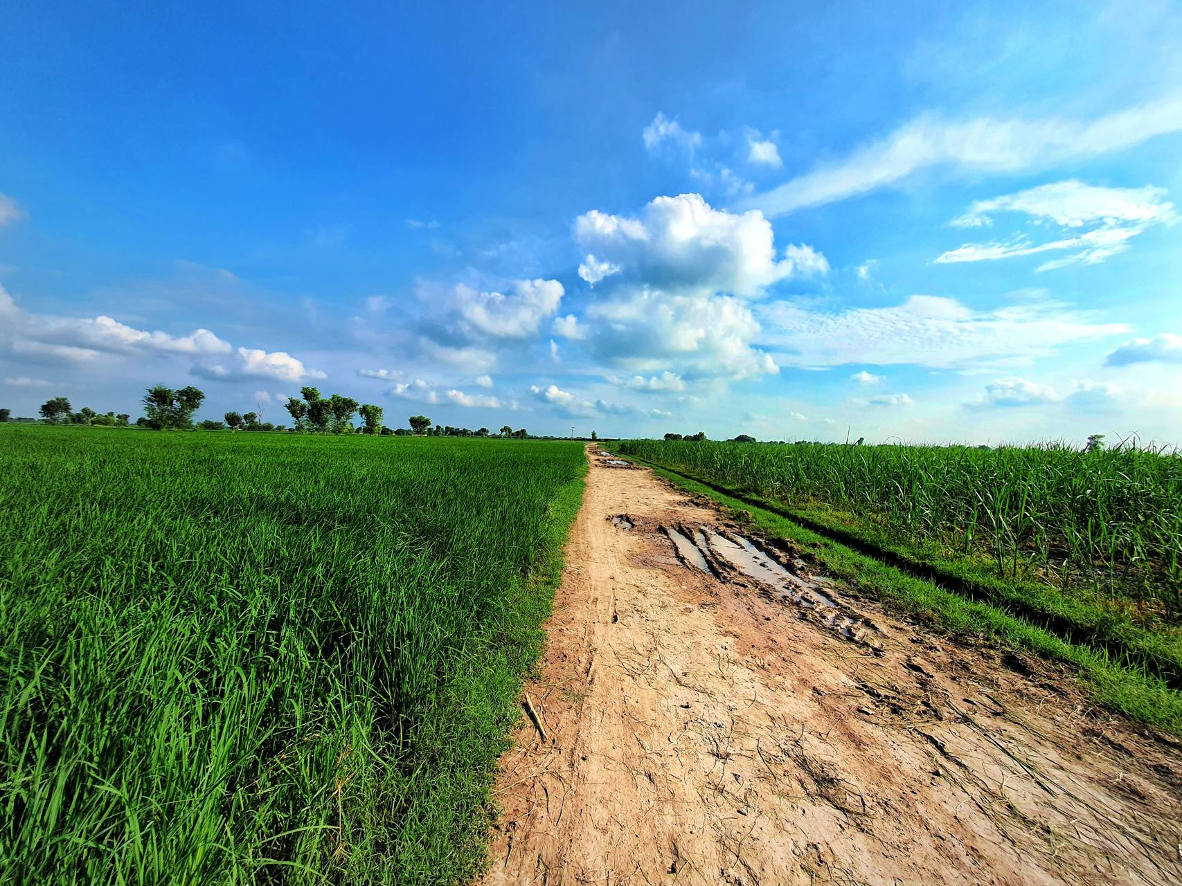 Road To Green Heaven