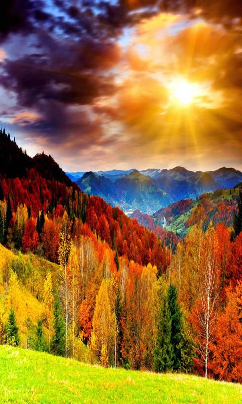Colorful Nature