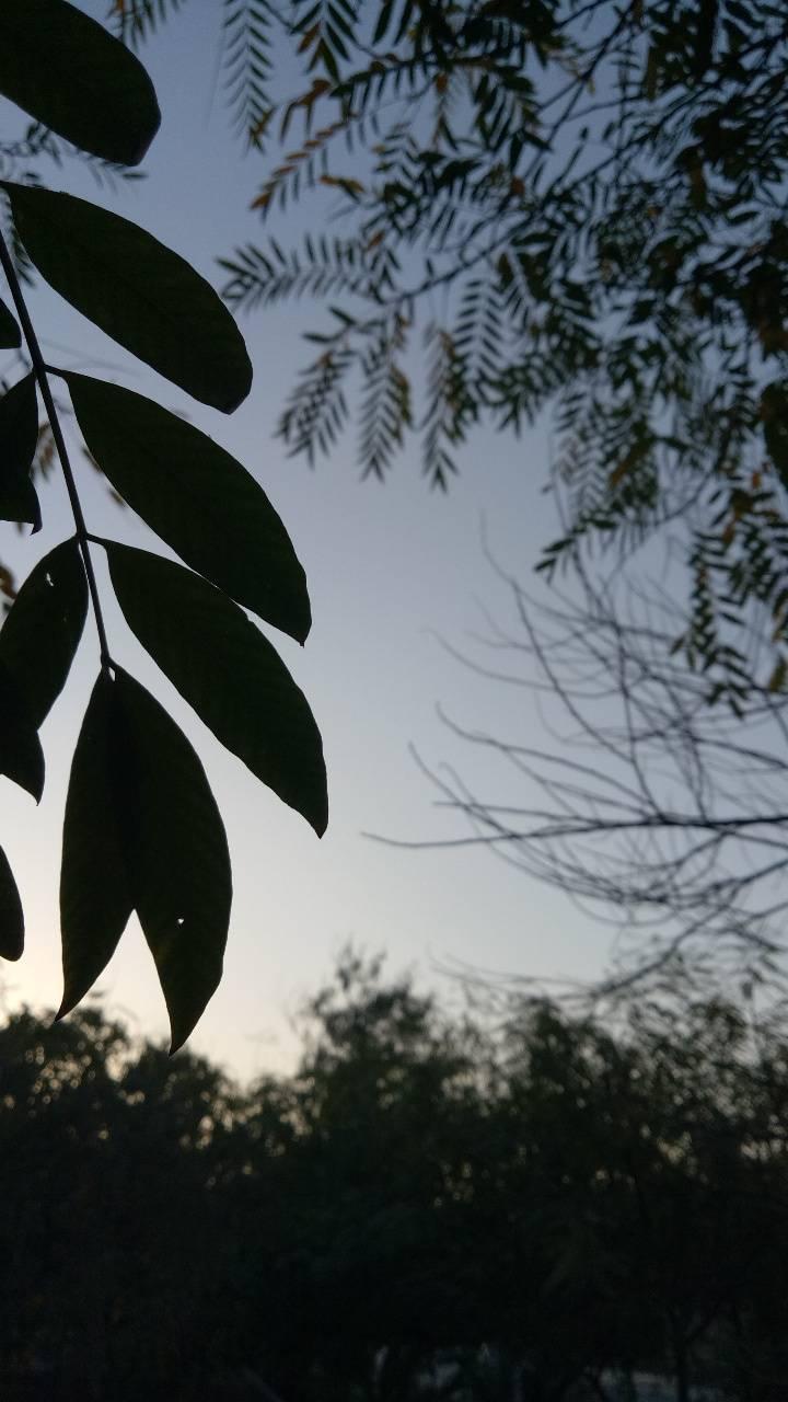 Natural evening