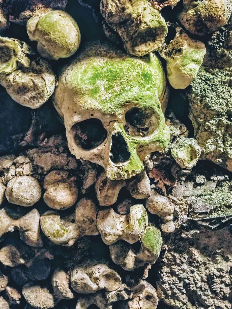 Moss Skull