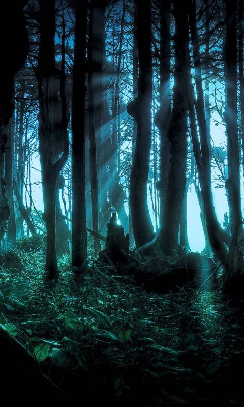 Night Forest Wallpaper By Pkdon2 Cd Free On Zedge