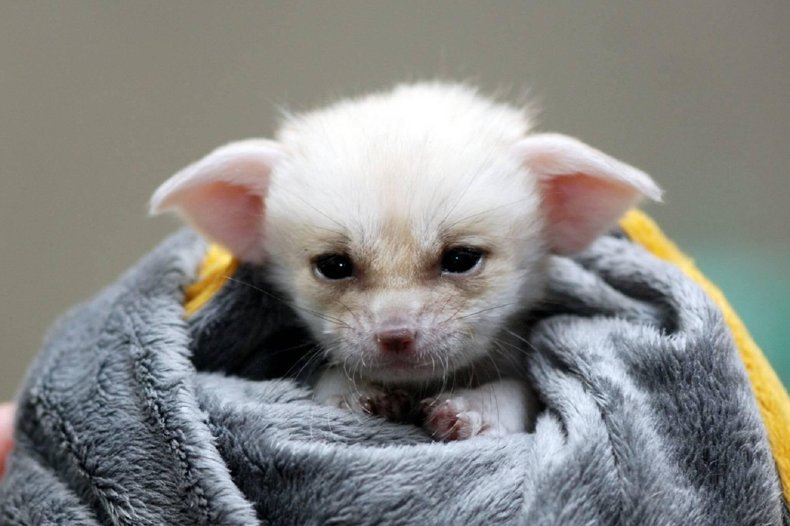 Yoda baby photo