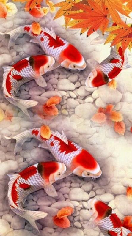 Koi Fish Wallpapers Free By Zedge