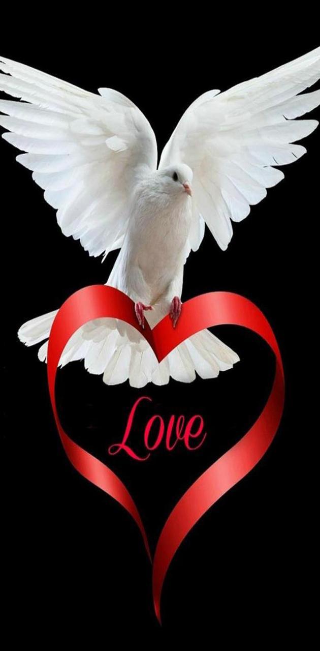 Love beautiful