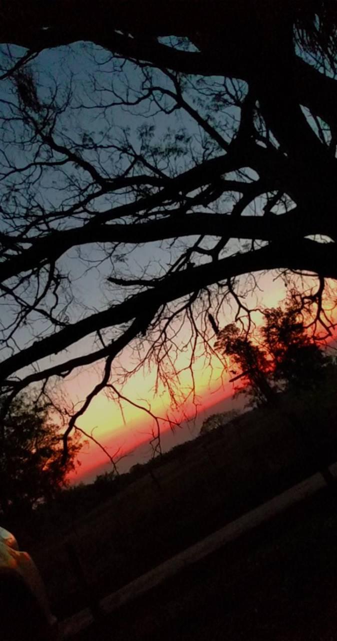 Sunset Fiel
