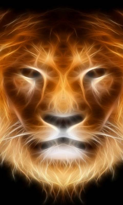 Lion Face Wallpaper By Spiderwolf27 71 Free On Zedge