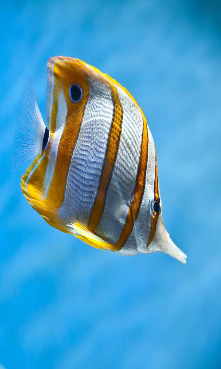 hd tropical fish