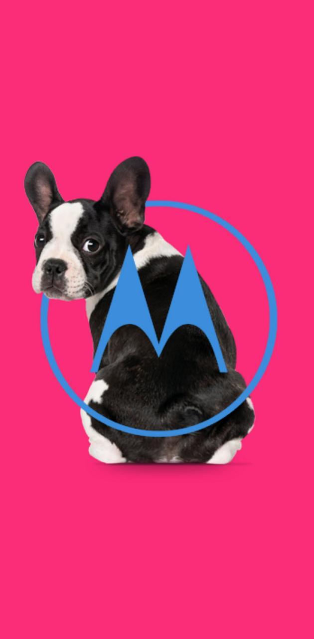 MOTOROLA PINK DOG